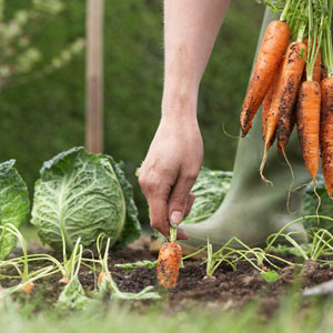 récolter durant toute l'année